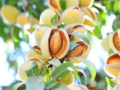 Blue Diamond on How to Grow the Perfect Almond